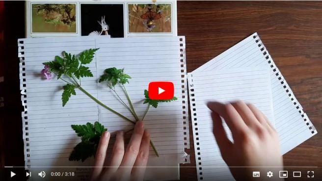 herbarium snapshot